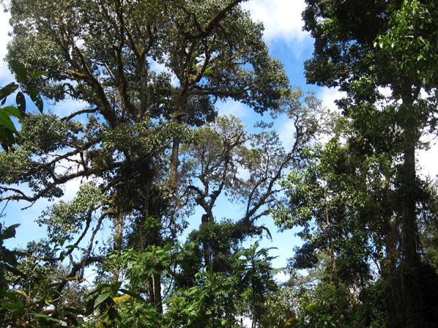 Arenal Volcano rainforest