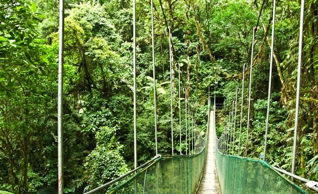 ONE OF THE HANGING BRIDGES IN ARENAL