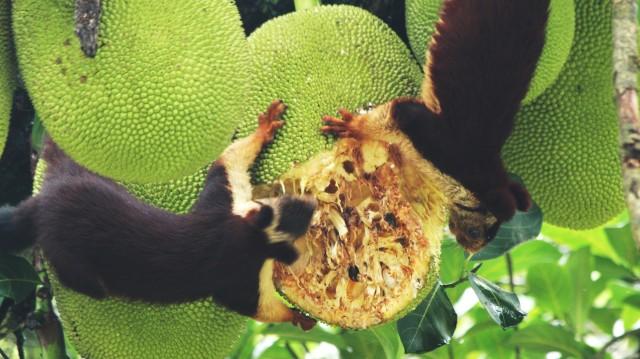 8-Weird-Feria-Fruits9