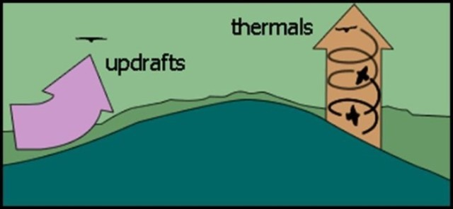 Thermals that raptors use