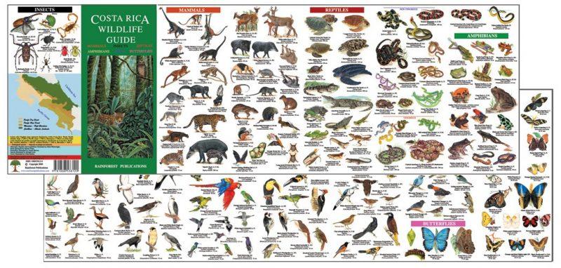 Birds Costa Tour Guide