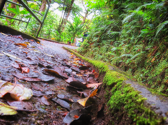Pathway in the rainforests of Costa Rica
