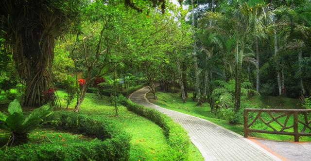 Rainforest Hanging Bridges Entrance