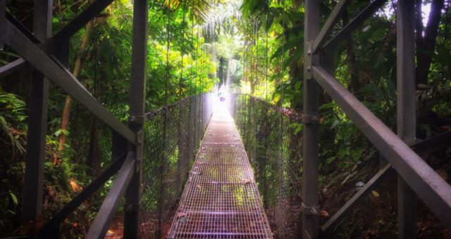 Rainforest Hanging Bridges