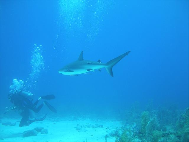 diving-1655739_640
