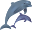 dolphins-158219_640