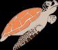 sea-turtle-1300198_640