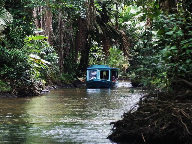 Tortuguero canals tour