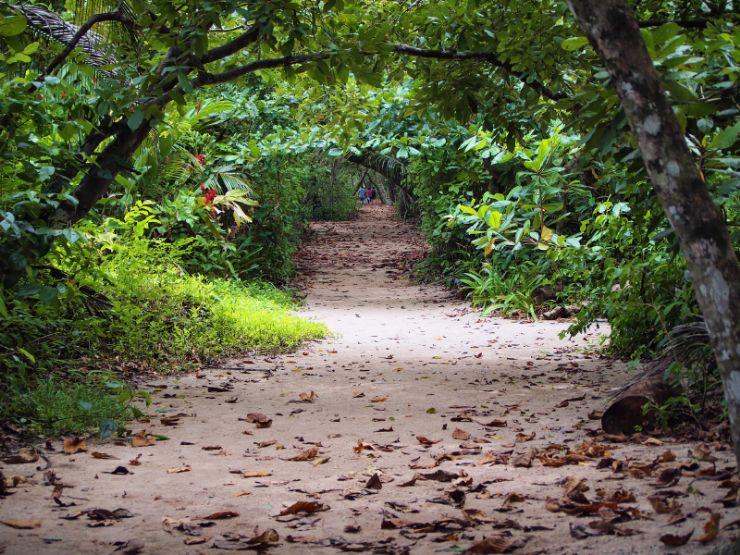 full cahuita national park path