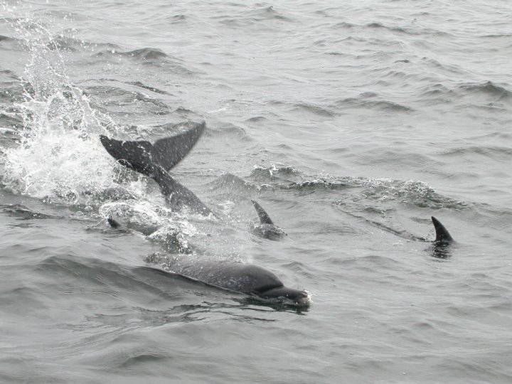 Whales and Dolphins Watching Tour