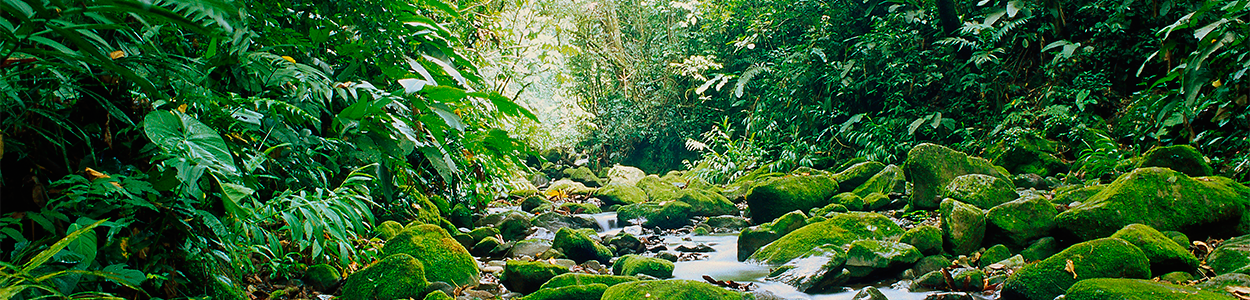 Savegre Cloud Forest river