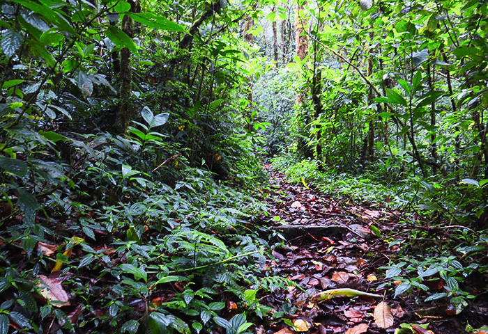 Costa Rica in July