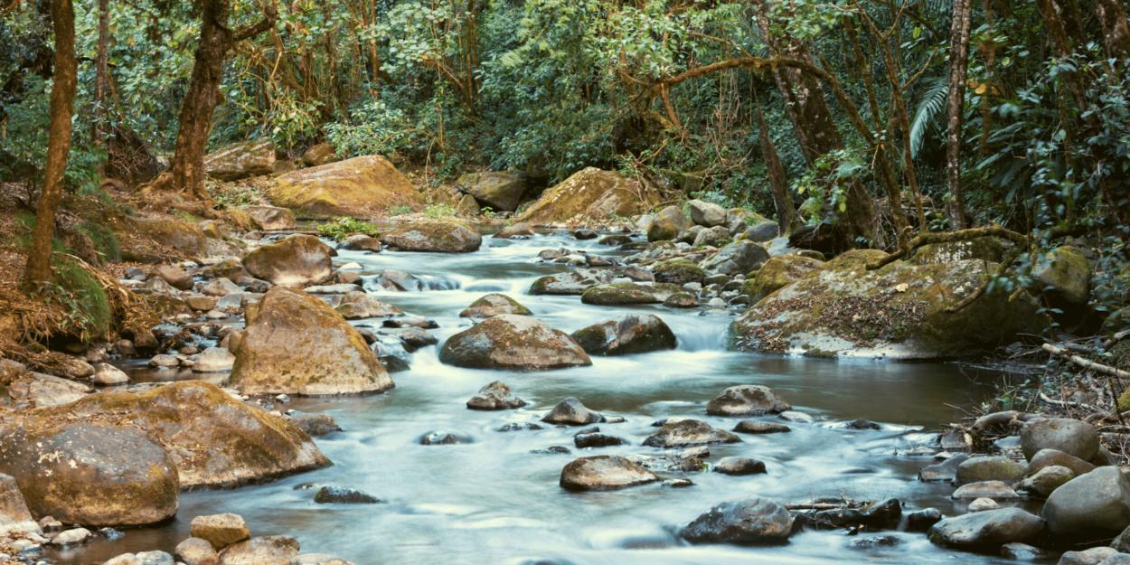 Savegre River in  San Gerardo de Dota in Costa Rica