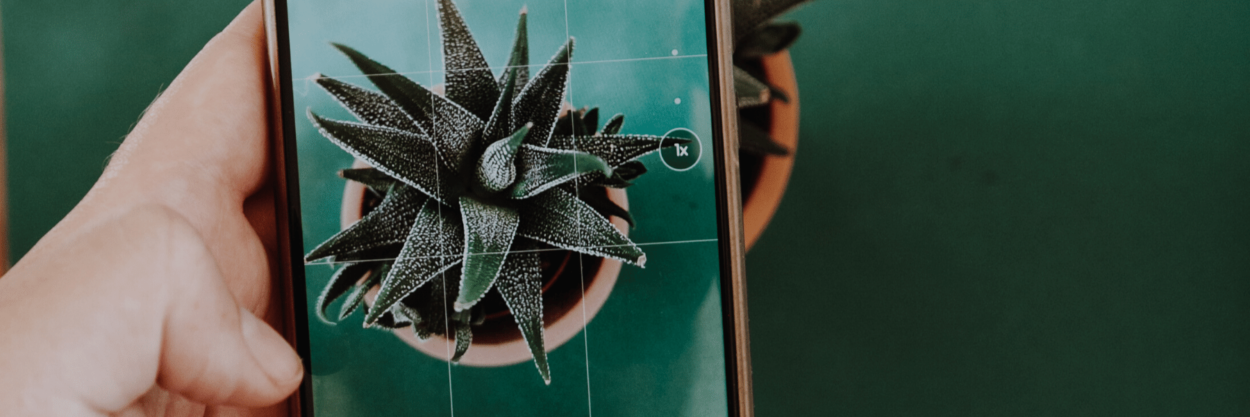 The rule of thirds photography tip applied to a photo of a plant